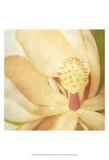 Vintage Magnolia II Print by Honey Malek