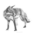 Wildlife Snapshot: Fox Giclee Print by Naomi McCavitt