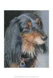 Natalie Long-haired Dachshund Kunst af Edie Fagan