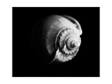 Shell Shape in Black Photographic Print by George Oze