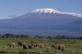 Elefanten Fotografie-Druck von  DLILLC