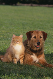 Dog and Cat Sitting Together on Lawn Photographic Print by  DLILLC