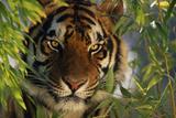 Tiger Sitting among Bamboo Leaves Fotografisk tryk af  DLILLC