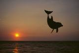 Dolphin Breaching the Oceans Surface Reproduction photographique par  DLILLC