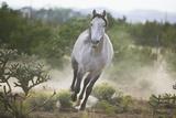 Spanish Mustang Running Fotografie-Druck von  DLILLC