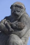 Gorilla Cradling Baby Fotografie-Druck von  DLILLC