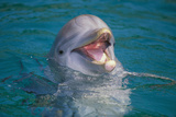 Bottle-Nosed Dolphin Fotografie-Druck von  DLILLC