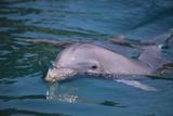 Delfines y marsopas Lámina fotográfica por  DLILLC