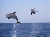 Dolphin Breaching the Oceans Surface Lámina fotográfica por  DLILLC
