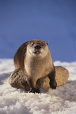 River Otter Fotografie-Druck von  DLILLC