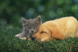 Kitten and Sleeping Puppy Reproduction photographique par  DLILLC