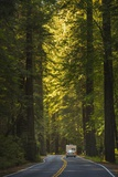 The Avenue of the Giants. Photographic Print by Jon Hicks