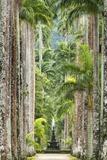 The Avenue of Royal Palms, Rio De Janeiro Botanical Garden. Fotografisk tryk af Jon Hicks