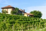 Summer Landscape in Monferrato (Italy) Lámina fotográfica por  Claudiogiovanni