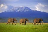 Elephants Walking Single File Fotografisk tryk af  DLILLC