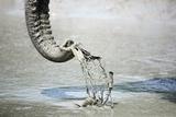 Elephant Trunk Scoops Mud Reproduction photographique par Richard Du Toit