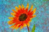 Fleur Reproduction photographique par André Burian