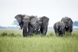 An Elephant Herd in Grassland Reproduction photographique par Richard Du Toit