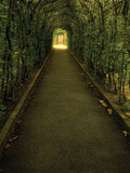 Tunnel of Shrub Prints by Dennis Frates