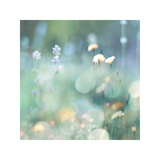 Morning Meadow I Giclée-Druck von Kate Carrigan