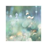 Morning Meadow I Impressão giclée por Kate Carrigan