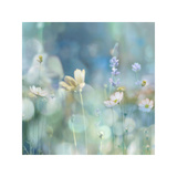 Morning Meadow II Giclée-Druck von Kate Carrigan