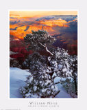 Grand Canyon Sunrise Print by William Neill
