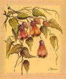 Flores Colgantes III Prints by L. Romero