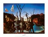 Zwanen met olifanten als spiegelbeeld in het water, ca.1937 Schilderij van Salvador Dalí