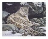 Awake Snow Leopard Print by Alan Sakhavarz