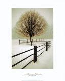 Eenzaamheid, geïsoleerde boom Print van David Winston