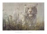 Monsoon- White Tiger (detail) Plakater af John Seerey-Lester