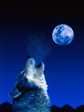 Wolf Howling at the Moon Fotografisk tryk af Jeff Vanuga
