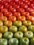 Red and Green Tomatoes Fotografie-Druck von Tracey Thompson