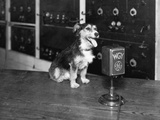 Dog at Wgy Radio Microphone Photographic Print
