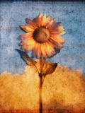 Sunflower and Sky Photographic Print by Colin Anderson