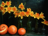 Arrangement of Daffodils and Oranges Photographic Print by Michelle Garrett