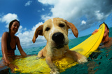 Puppy Riding on Surfboard Photographic Print by Rick Doyle