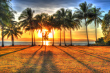 Sunlight Rising behind Palm Trees in HDR Picture of Port Douglas Photographic Print by  hotshotsworldwide