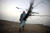 A Woman Carries Firewood at a Garbage Dump on the Outskirts of New Delhi Photographic Print by Stringer India