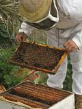 A Beekeeper Holds a Honeycomb at Al Taryyaq Farm in Jordan Valley Photographic Print by Ali Jarekji