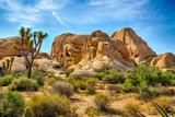 Parque Nacional de Joshua Tree Impressão fotográfica premium por  garytog