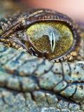 Baby Crocodile Eye Fotografisk tryk af  EvanTravels
