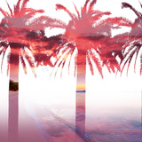 Palms and Sunset in Double Exposure Fotografie-Druck von Gabriele Maltinti
