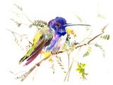 Hummingbird 4 Poster by Suren Nersisyan