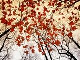 Bäume mit kahlen Zweigen und roten Ahornblättern, die entlang der Landstraße wachsen Metalldrucke von Raymond Gehman