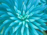 Euphorbia, Roche Harbor, Washington, USA Metallivedokset tekijänä Rob Tilley