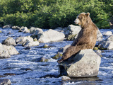 Brown Bear (Ursus Arctos) Sitting on Rock in River, Kamchatka, Russia Kunst på metal af Sergey Gorshkov/Minden Pictures