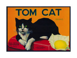 Tom Cat Lemon Label - Orosi, CA Metalltrykk av  Lantern Press