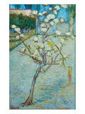 Blossoming Pear Tree Kunstdruck von Vincent van Gogh